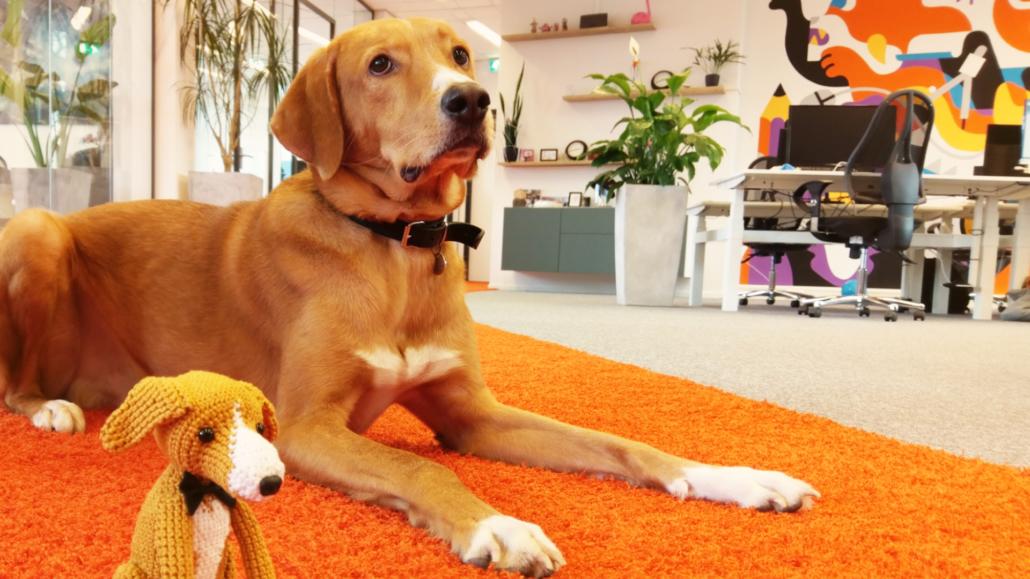 Woody Office Dog